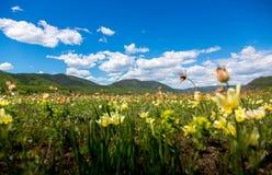 Πεδίο με τα λουλούδια στοκ φωτογραφία με δικαίωμα ελεύθερης χρήσης