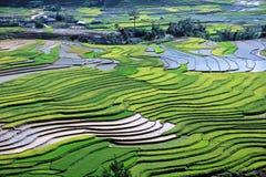 πεδίο πράσινο στοκ φωτογραφία