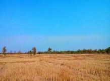 Πεδίο ρυζιού μετά από τη συγκομιδή Στοκ Φωτογραφίες