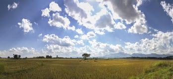 Πεδίο ρυζιού στη βόρεια Ταϊλάνδη στοκ εικόνα