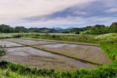 Πεδίο ρυζιού στις Φιλιππίνες Στοκ Εικόνες