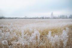 Πεδίο το χειμώνα Στοκ εικόνα με δικαίωμα ελεύθερης χρήσης