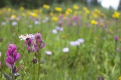 Πεδίο των λουλουδιών Στοκ φωτογραφία με δικαίωμα ελεύθερης χρήσης