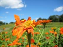 Πεδίο των λουλουδιών Στοκ φωτογραφίες με δικαίωμα ελεύθερης χρήσης