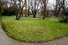 Πεδίο των λουλουδιών Στοκ Φωτογραφίες