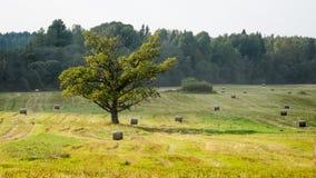 πεδίο φθινοπώρου Στοκ εικόνα με δικαίωμα ελεύθερης χρήσης