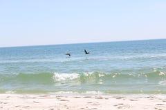 Πελεκάνοι που πετούν πέρα από την άσπρη παραλία άμμου Στοκ φωτογραφία με δικαίωμα ελεύθερης χρήσης