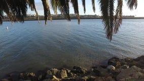 Πελεκάνος που κολυμπά στη μαρίνα del rey απόθεμα βίντεο
