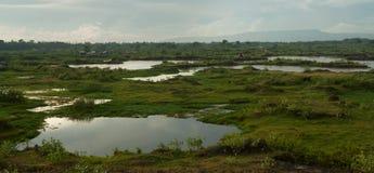 Πεδιάδα με την άφθονη βλάστηση και τις πολυάριθμες λίμνες, που συνδέονται με τα ρεύματα, μπλε ουρανός με τα θαμπά άσπρα σύννεφα,  Στοκ Φωτογραφίες