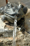 Πηγή με το βάτραχο ορείχαλκου και την προβολή ύδατος Στοκ Εικόνες