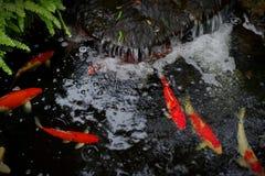 Πηγή νερού με τα ψάρια koi στοκ φωτογραφία