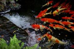 Πηγή νερού με τα ψάρια koi στοκ εικόνες