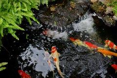 Πηγή νερού με τα ψάρια koi στοκ φωτογραφίες