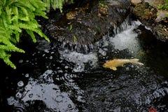 Πηγή νερού με τα ψάρια koi στοκ εικόνες με δικαίωμα ελεύθερης χρήσης