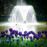 πηγή λουλουδιών Στοκ φωτογραφίες με δικαίωμα ελεύθερης χρήσης