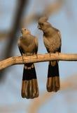Πηγαίνετε μακριά ζευγάρι πουλιών στην πέρκα Στοκ Εικόνες