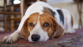 Πηγαίνετε μακριά, σκυλί αυτό Στοκ φωτογραφία με δικαίωμα ελεύθερης χρήσης