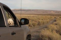 πηγαίνετε poodle έτοιμο Στοκ φωτογραφία με δικαίωμα ελεύθερης χρήσης