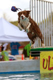 πηδήματα σκυλιών πέρα από το παιχνίδι λιμνών Στοκ Φωτογραφία