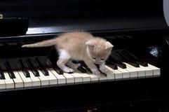 πιάνο γατών Στοκ εικόνα με δικαίωμα ελεύθερης χρήσης