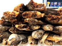 Πιάστε το ψάρι που επιπλέει σε σας Τεμάχιο από το κατάστημα ψαριών Στοκ Εικόνες