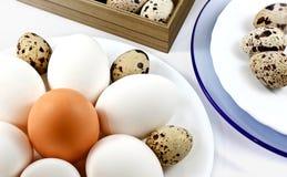 πιάτο αυγών Στοκ εικόνα με δικαίωμα ελεύθερης χρήσης
