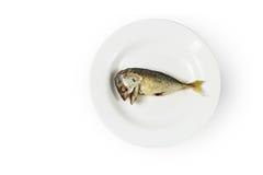 Πιάτο και κουτάλι Στοκ εικόνα με δικαίωμα ελεύθερης χρήσης