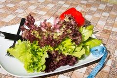 Πιάτο της σαλάτας Διατροφή και ένας υγιεινός τρόπος ζωής Στοκ Εικόνα