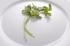 πιάτο cilantro Στοκ Εικόνα