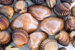 πιασμένα πρόσφατα θαλασσινά νόστιμα Στοκ Εικόνες