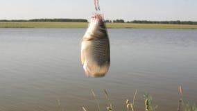 Πιασμένα ψάρια σε έναν γάντζο φιλμ μικρού μήκους