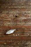 Πιασμένα ψάρια στο ξύλινο πάτωμα Στοκ Εικόνες