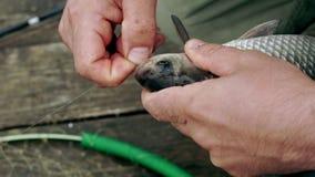 Πιασμένα ψαράς ψάρια στο γάντζο Αλιεία του γάντζου στο στόμα ενός ψαριού απόθεμα βίντεο