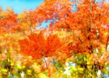 πιασμένος πορτοκαλής με&r Στοκ φωτογραφία με δικαίωμα ελεύθερης χρήσης