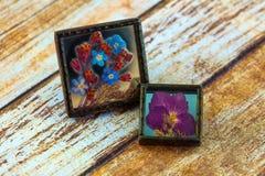 Πιεσμένες εικόνες λουλουδιών Στοκ Εικόνα