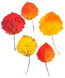 Πιεσμένος τα φύλλα που απομονώνονται Στοκ εικόνες με δικαίωμα ελεύθερης χρήσης