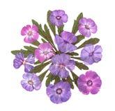 Πιεσμένος phlox applique Στοκ εικόνες με δικαίωμα ελεύθερης χρήσης
