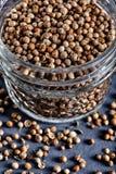 Πικάντικο βάζο των ξηρών σπόρων Coriandrum κορίανδρου sativum Στοκ Εικόνες