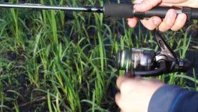 Πικάσο Triggerfish φιλμ μικρού μήκους
