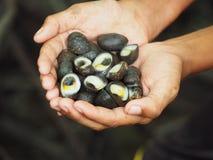 Πικρά κοχύλια στο χέρι Στοκ Φωτογραφίες