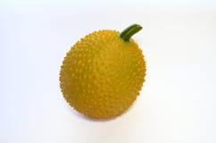 πικρή κολοκύθα μωρών jackfruit ακανθωτή Στοκ Εικόνα