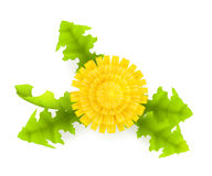 πικραλίδα κίτρινη Στοκ Φωτογραφία