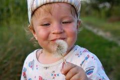 πικραλίδα Στοκ φωτογραφίες με δικαίωμα ελεύθερης χρήσης