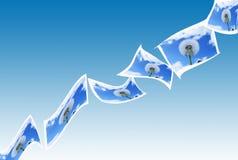 πικραλίδες που πετούν τι Στοκ φωτογραφία με δικαίωμα ελεύθερης χρήσης