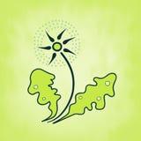 Πικραλίδα με τα πράσινα φύλλα, θέμα άνοιξη Στοκ φωτογραφία με δικαίωμα ελεύθερης χρήσης