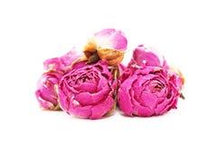 Πικραλίδα, λουλούδι άνοιξη Στοκ φωτογραφία με δικαίωμα ελεύθερης χρήσης