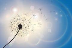 Πικραλίδα σε ένα θερινό αεράκι απεικόνιση αποθεμάτων