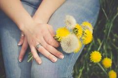Πικραλίδα στα χέρια του κοριτσιού Στοκ φωτογραφία με δικαίωμα ελεύθερης χρήσης