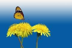 Πικραλίδες με την πεταλούδα Στοκ Φωτογραφίες