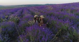 Πικ-νίκ δύο αδελφών στον τομέα lavender Εναέριος βλαστός απόθεμα βίντεο